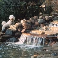 pondking-full