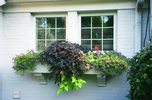 Window Box Landscaping - Cincinnati