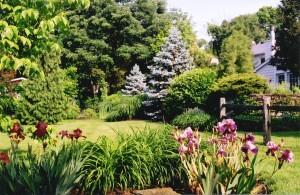 Mature Landscape